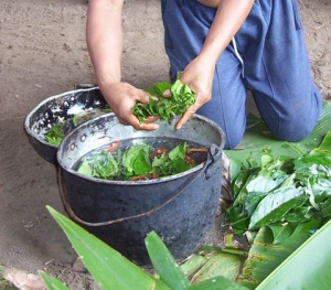Ayahuasca-preparation